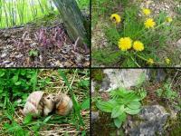 Okazy fauny i flory