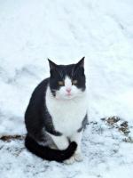 W Hucisku spotkalismy takiego oto kotka