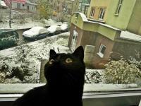 Niedzielny poranek 28 października- mija kotka Czarna zadziwiona tym co zobaczyla za oknem