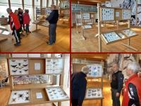 Wystawa motyli i innych owadów