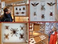 Wystawa motyli i innych owadów- pająki sa urocze, prawda?