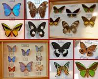 Motyle