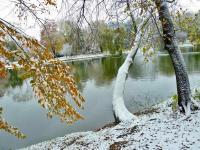 Zimowa złota jesień w parku