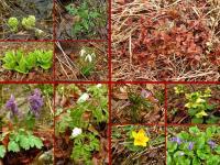 bogactwo wiosennej roślinności