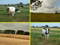 Swojskie klimaty :-)