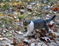 Kotek goni grupę turystów